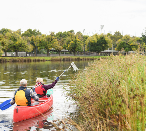 Kayakers collecting litter